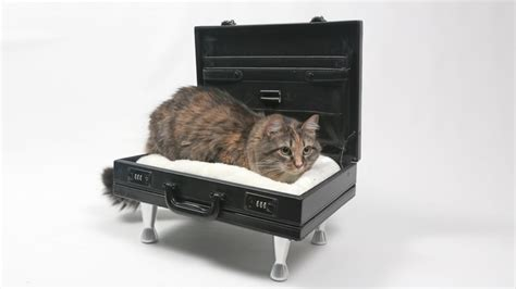 cat bed side table the bloq by binq design diy cat bed briefcase