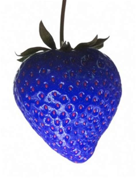 Strawberry Blue itricks magic news magic and podcasts 187