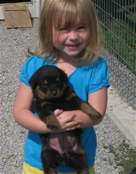 rottweiler breeders in md rottweiler puppies for sale in de md ny nj philly dc and baltimore breeds picture