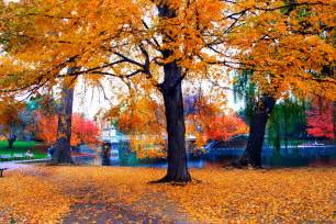 Fall foliage spectacular