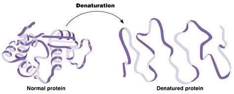 a protein can become denatured when food science cooking thermodynamics and biochemistry
