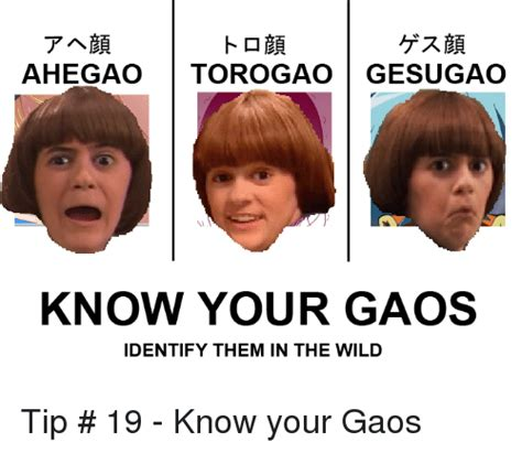 Know Your Meme Faces - tabe ahegao torogao gesugao know your gaos identify them