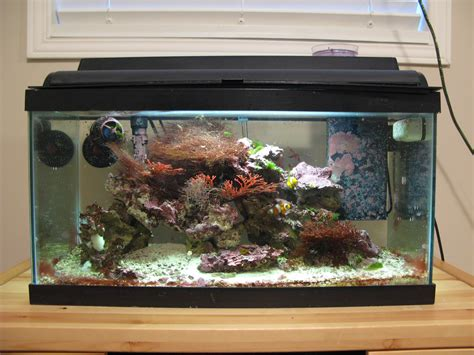 15 gallon marine saltwater aquarium setup w fish accessories a mes yeux by tracy fisher