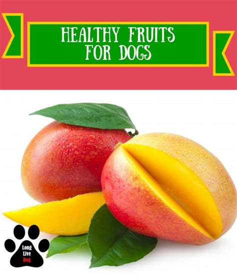 strawberries ok for dogs the world s catalog of ideas