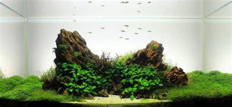 simonsaquascapeblog   aquarium landscape