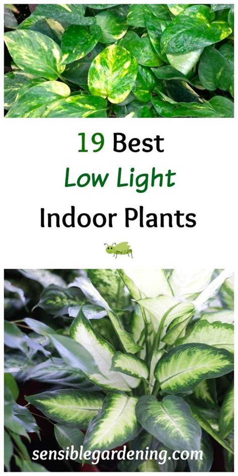 plants that need low light 19 best low light indoor plants with sensible gardening