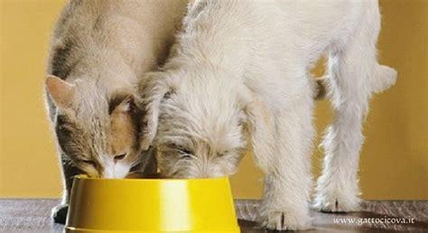 alimentazione naturale per gatti diete ipoallergeniche per gatti e cani il paradosso