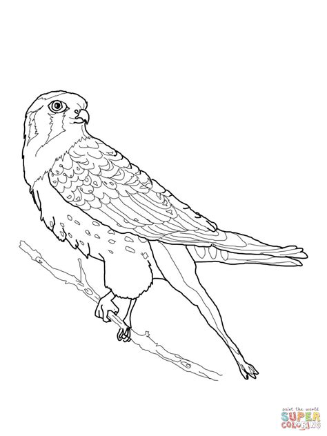 Perched American Kestrel Coloring Page Supercoloring Com American Coloring Pages Printable Printable