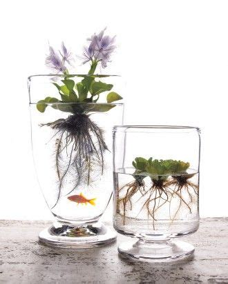 Honestly Its Glass Livio De Marchi by 92 Best Images About House Plants On