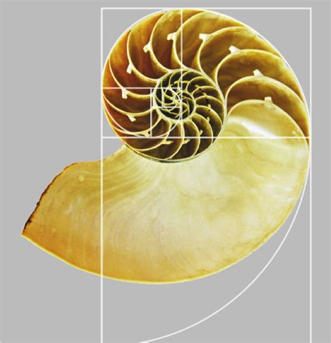 golden section in nature scale and proportion in interior design the golden ratio