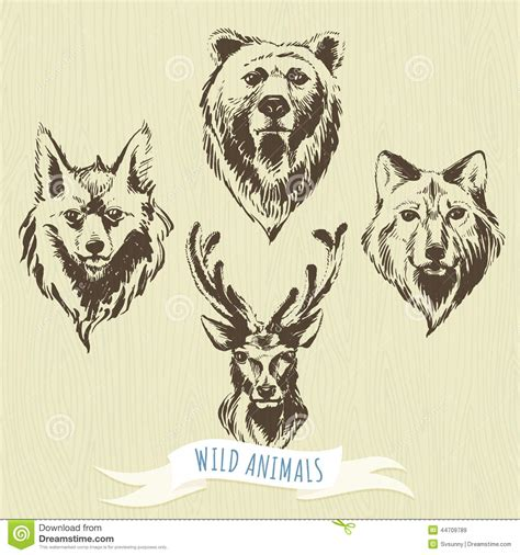 set of marker hand drawn forest animals wolf bear deer