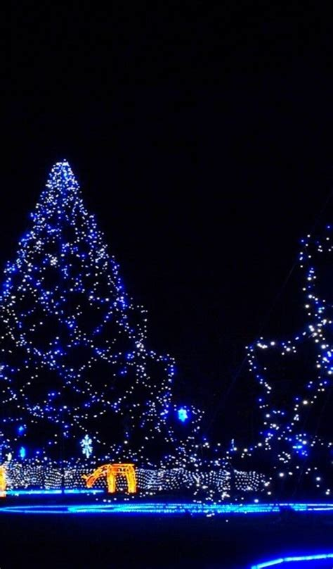 blue christmas trees magic night