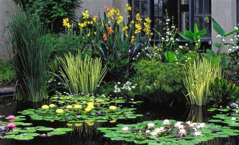 imagenes de jardines acuaticos plantas acu 225 ticas oxigenadoras para estanques acuaticas
