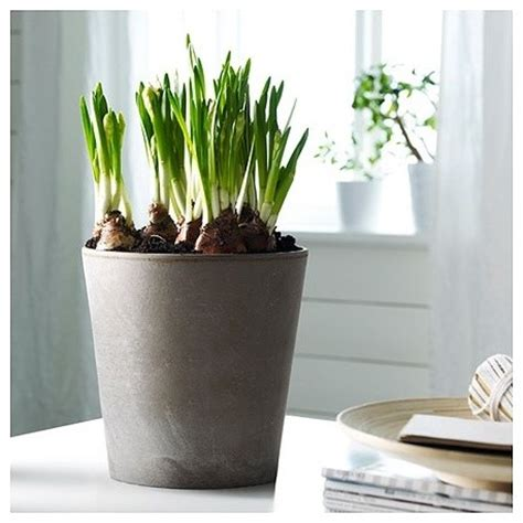 mandel plant pot contemporary indoor pots and planters