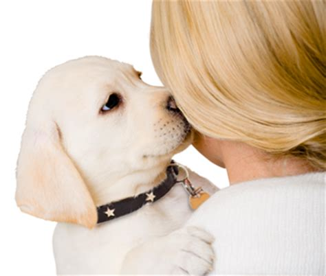 puppies and more rescue puppy adoption search by color age breed location and more