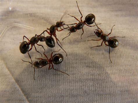 come eliminare le formiche dal giardino come fare una corona d alloro per la laurea