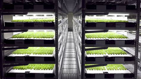 vertical farms wrong    levels treehugger