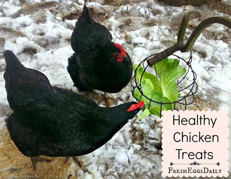 backyard chicken treats backyard chicken treats 28 images 5 chicken treats for