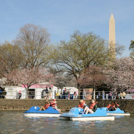 pedal boating in dc cherry blossom festival boating in dc