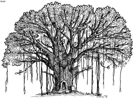 Coloring Pages Of Banyan Tree | tree coloring pages banyan tree coloring pages kids