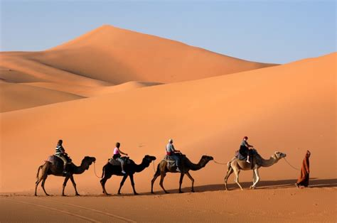 fototapete kamel karawane die sandduenen  der sahara