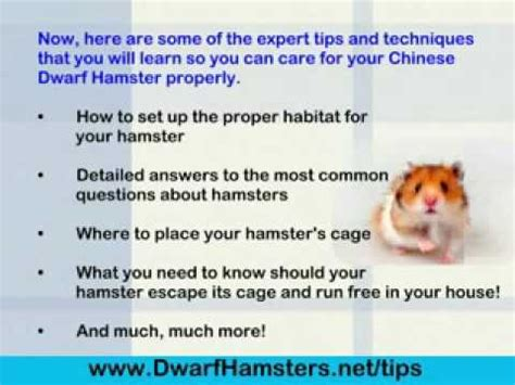 7 Tips On Taking Care Of Hamsters by Hamster Care
