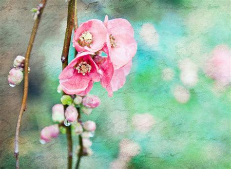 imagenes bonitas de amor vintage spring flowers vintage effect fondos de pantalla gratis