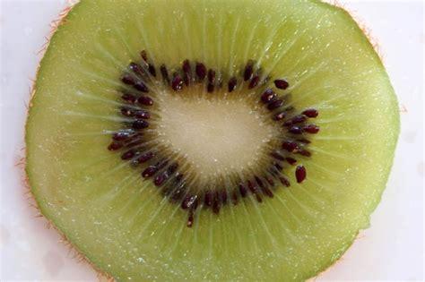 j fruit sci kiwifruit seeds science learning hub