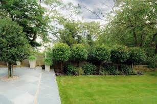 Backyard Ideas Trees 10 Privacy Plants For Screening Your Yard In Style