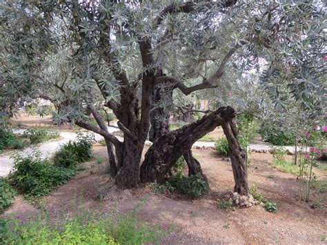 olive garden hour