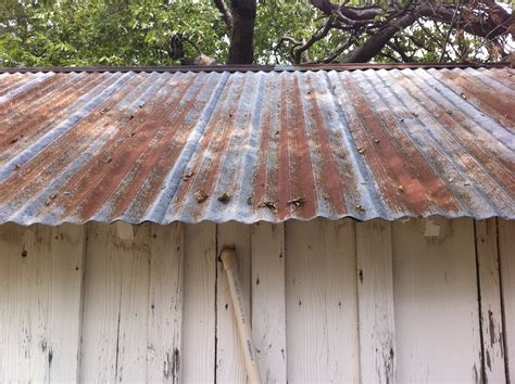 tin roof tin roof on a tool shed the cavender diary