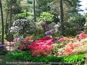 mississauga s brueckner rhododendron gardens tour 2010 date set for last sunday in may karen