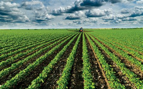 Can Soybeans Be Planted To Detox Land by Image Gallery Soybean Rows