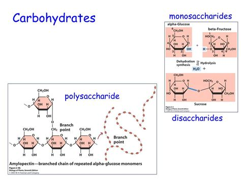 carbohydrates disaccharides respiration chapter ppt