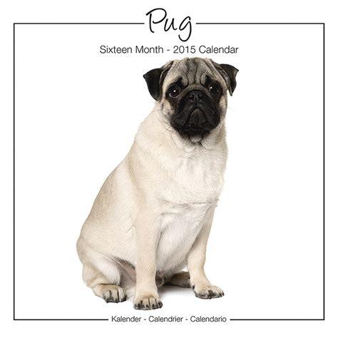 pug wall pug wall calendar studio 2015 pet prints inc