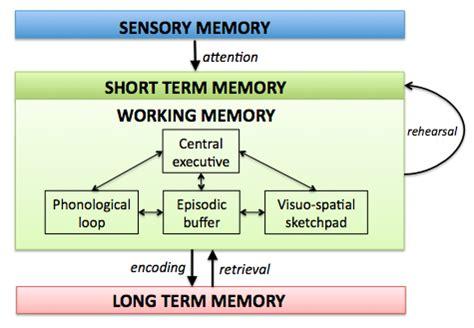 Memory V in working memory memorising