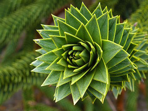pattern and structure found in nature aqa incredible exles of fractals found in nature photo