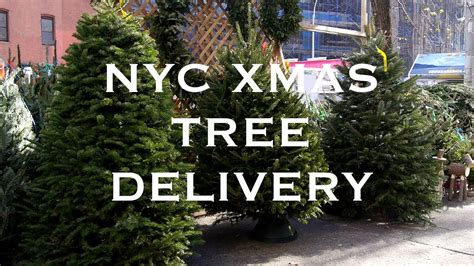 christmas tree delivery nyc sohotrees com xmas trees