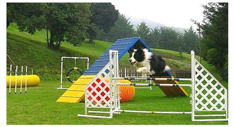 puppy obstacle course top 10 pets to your pet