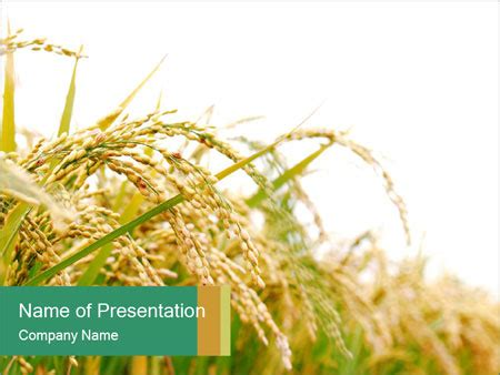 powerpoint themes rice rice farm powerpoint template backgrounds id 0000016763
