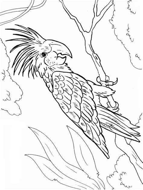 macaw bird coloring page macaw coloring pages download and print macaw coloring pages