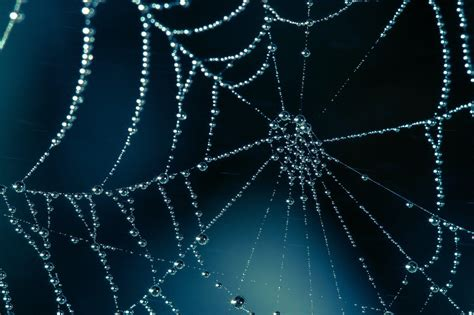 hd web 1080p spider web wallpapers wallpaper cave