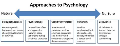 biographical approach definition nature nurture in psychology simply psychology