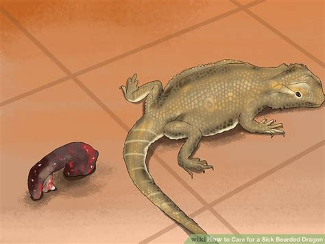 3 ways to care for a sick bearded dragon wikihow