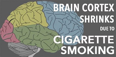 Brain Shrinks To Detox At by Cigarette Can Result To Brain Shrinkage