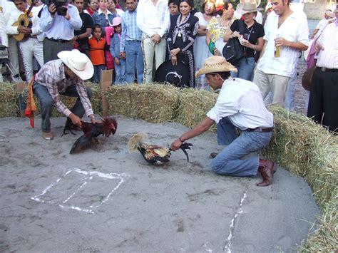 rep dominicana pelea de gallos pelea de gallos