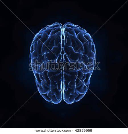 brain x brain xray anatomy stock illustration 133874900