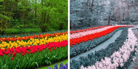 how does color blindness work how who are color blind see the world business