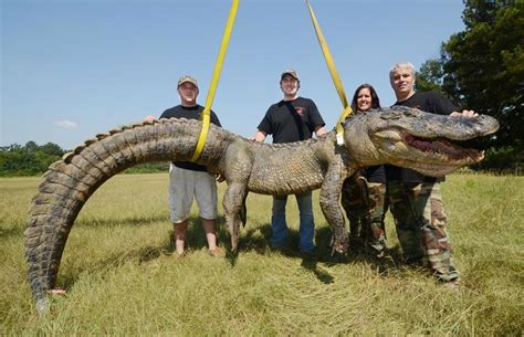 Records Louisiana Us Alligator Hunters Record For Beast Three