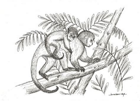 how to draw a doodle monkey 17 best ideas about monkey drawing on monkey